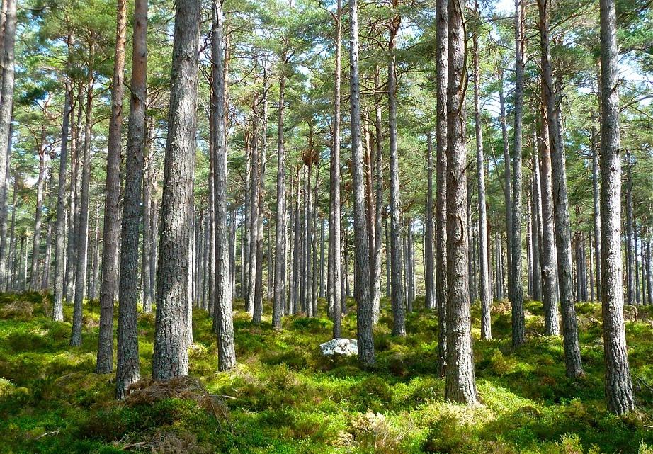 Метод ученых РФФ поможет выявить сухие деревья и предотвратить пожары