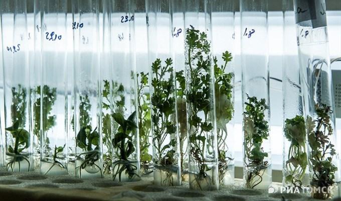 Опытные образцы растений