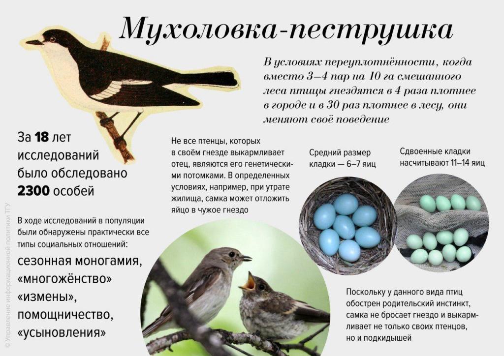 Инфографика ТГУ.jpg