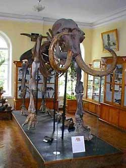 Палеонтологический музей имени В.А. Хахлова