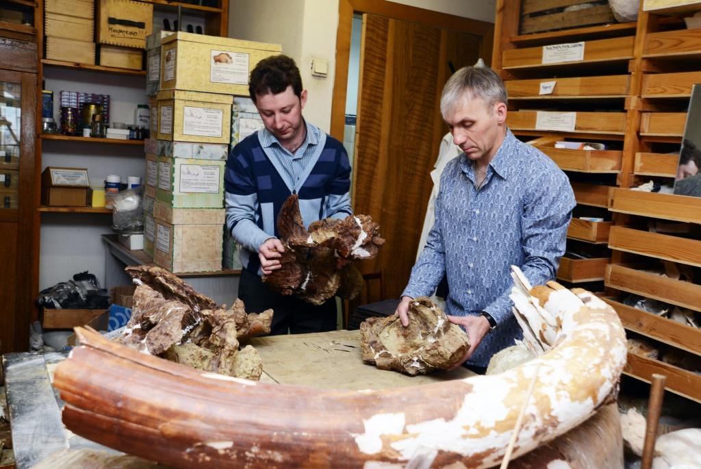Иванцов и Лещинский собирают части крестца динозавра.JPG